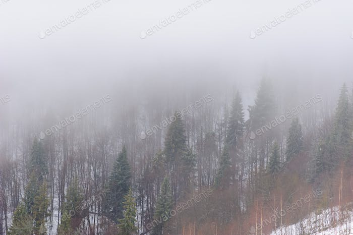 Winter forest covered in snow. Foggy weather. Bad visibility.
