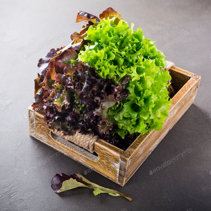 Head of fresh organic lettuce salad