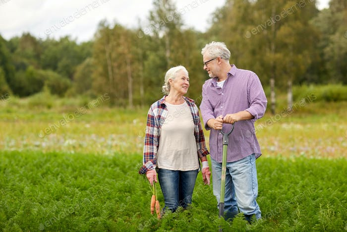senior couple with shovel picking carrots on farm