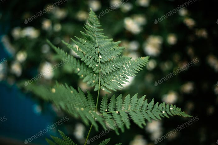 beautiful green fern leaf in focus