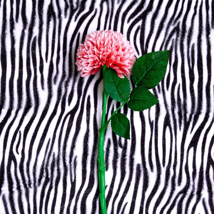Flower on zebra print background. Minimal flat lay art