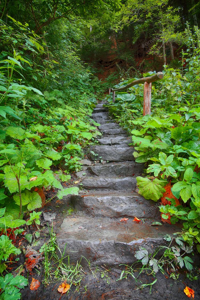 Stone staircase leading up a walkway through the Forest