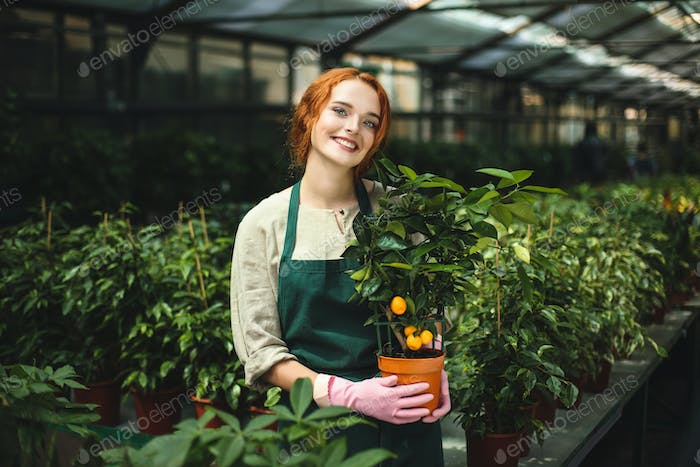 Lady in apron and pink gloves standing with little mandarin tree in pot and in greenhouse