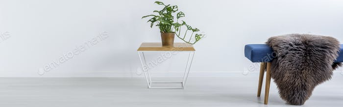 Table with plant and bench with fur