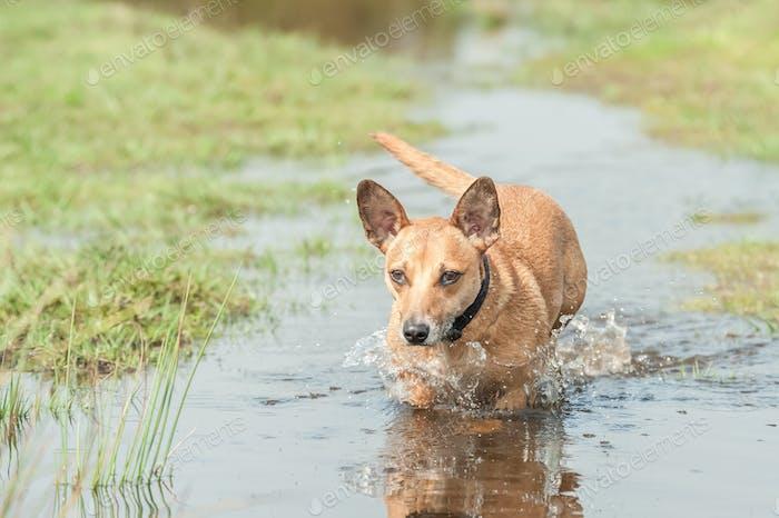 running through water