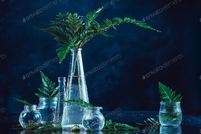 Clear glass bottles and vases with green fern leaves on a dark background. Natural decorations