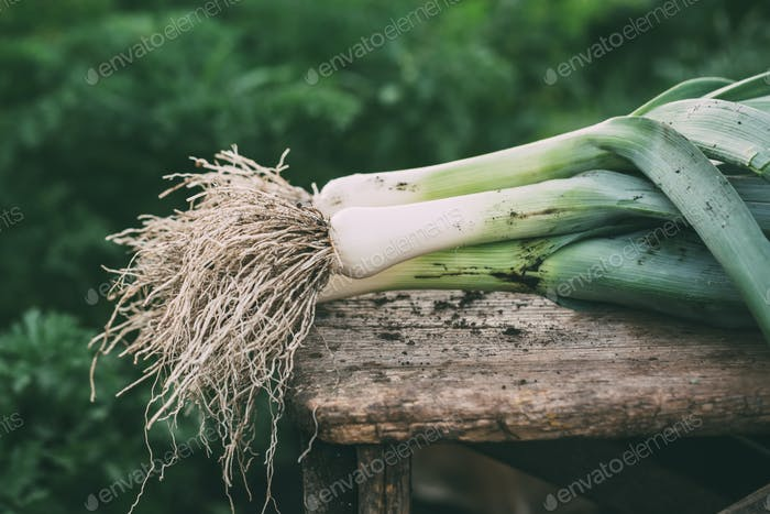 Organic leeks on a wooden surface, farm food