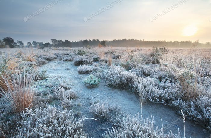 frosted path at sunrise