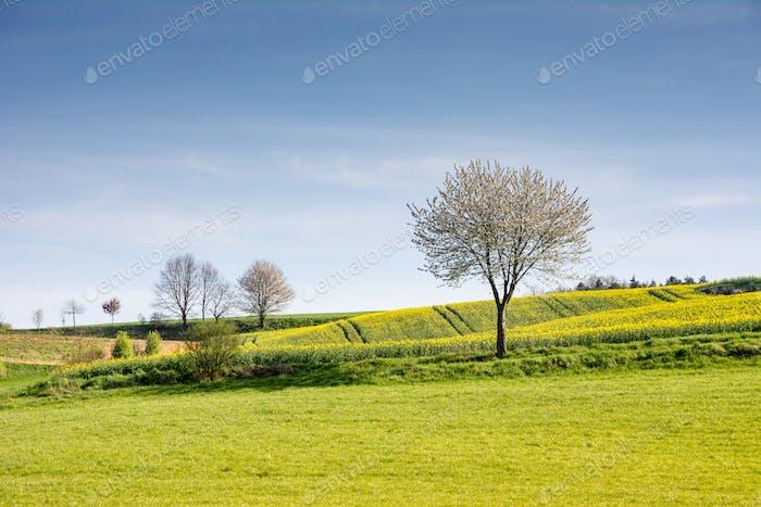 Horizontal con un Árbol en flor