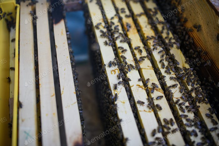 Top view of honeycomb frames in the hive