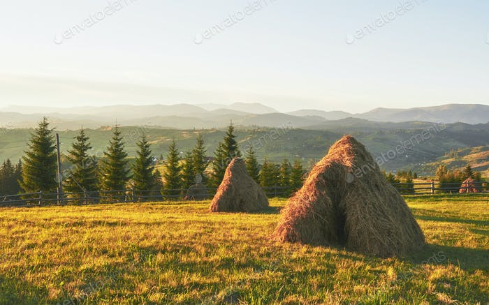 Haystack on sunset. Meadow, piece of grassland, especially one used for hay. Carpathian Mountains