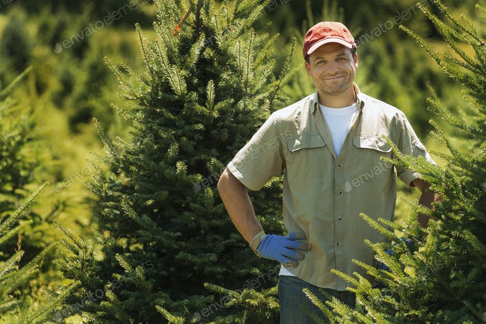 A man wearing protective gloves clipping and pruning a crop of conifers
