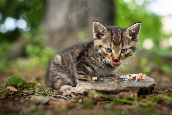 Cute little hungry kitten
