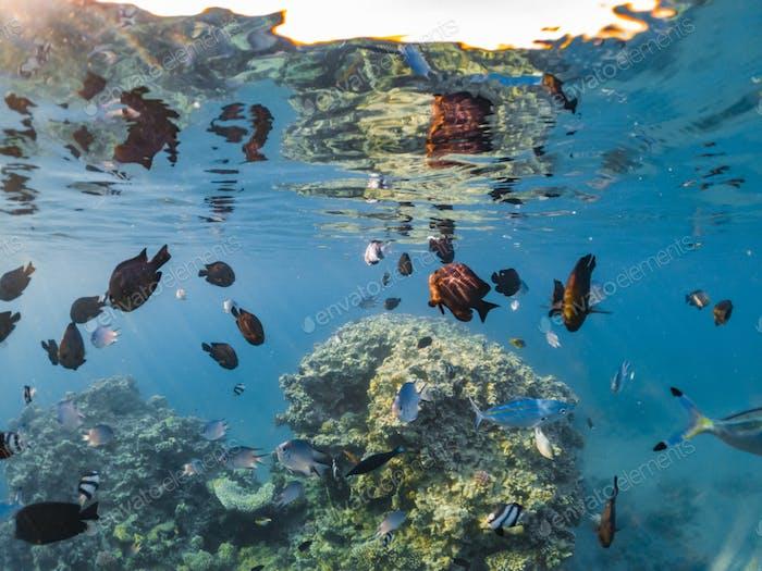 Wunderschöne Unterwasserwelt mit Korallen und tropischen Fischen