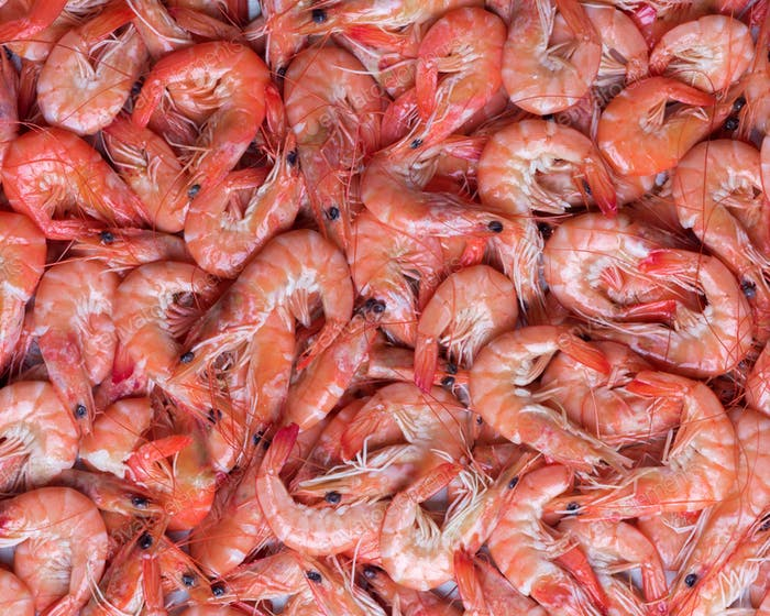 Big boiled shrimps close up