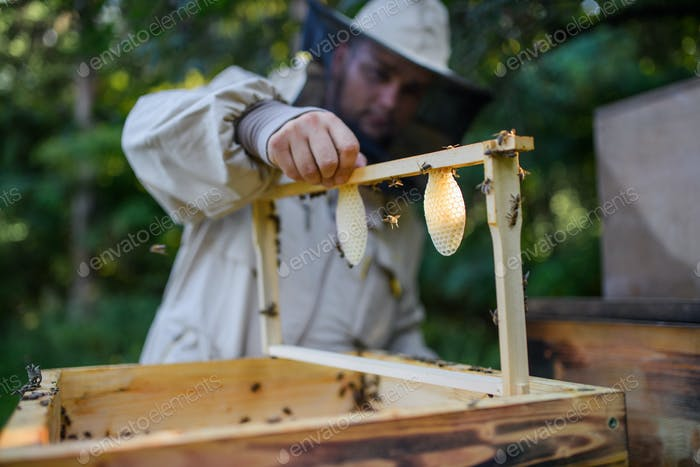 Portrait of man beekeeper holding new honeycomb frame in apiary