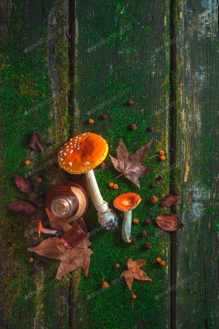 Red toadstool mushrooms on a table with moss and leaves. Potion ingredients header. Autumn flat lay