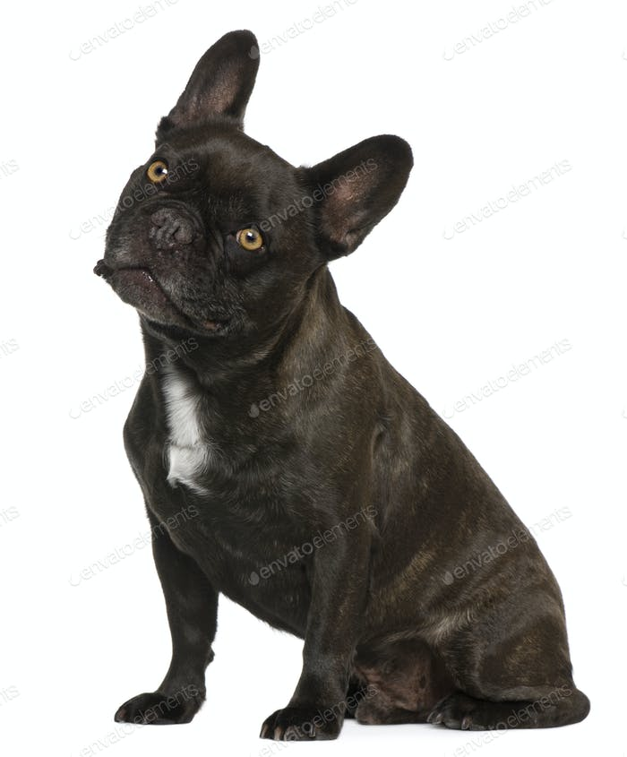 French Bulldog, 9 years old, sitting in front of white background