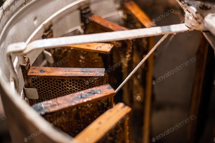 Beekeeper spinning uncapped frames in the centrifuge-like metal container, the process of honey