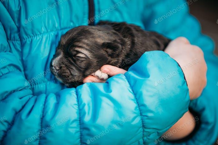 Puppy Sleeps On Girls Hand