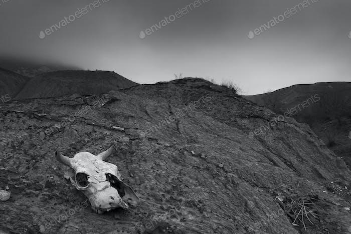 Animal skull in cracked dry mud