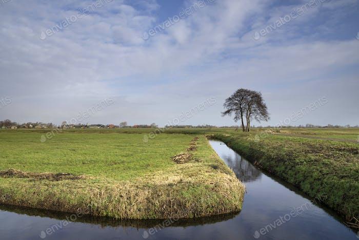 Baum in einer weiten Landschaft