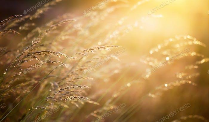 Plantas de polen