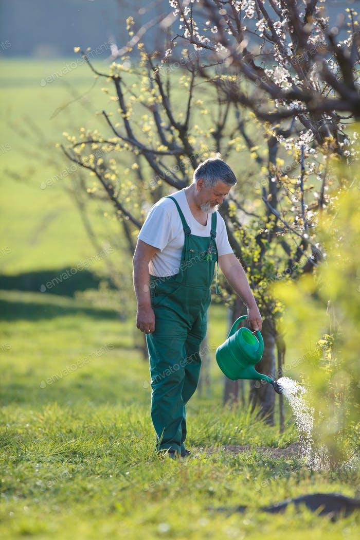 watering orchard/garden - portrait of a senior man gardening in