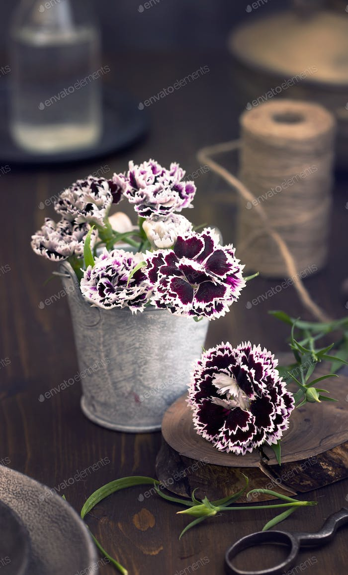 Sweet william flowers on table