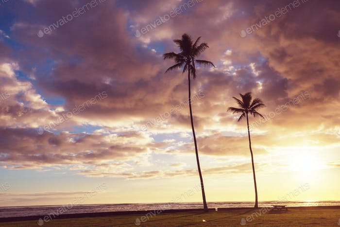 Hawaiian beach at sunrise
