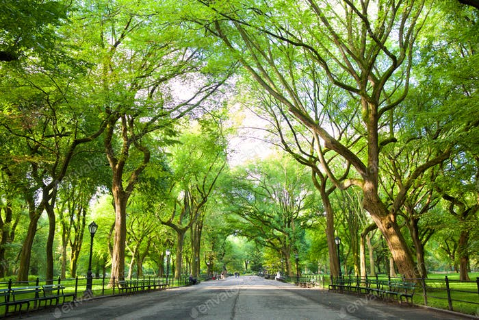 The Mall in Central Park