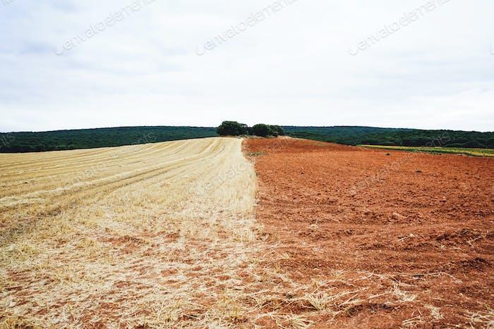 Landwirtschaftsfeld in Burgos nach der Ernte
