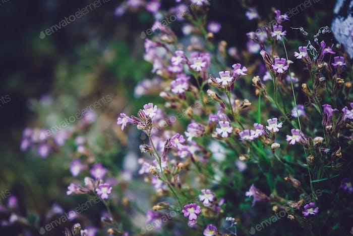 Schöner Hintergrund von Wildblumen