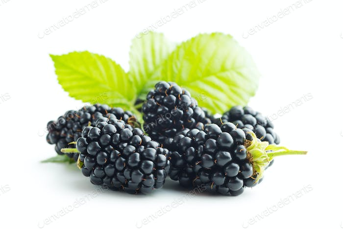 Tasty ripe blackberry.