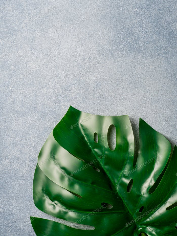 Monstera leaf on gray background