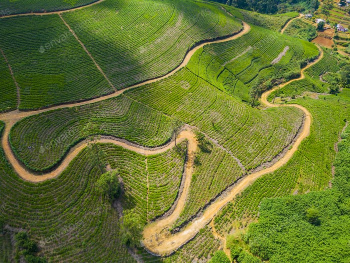 Aerial view of hills with tea plantation misty morning in India