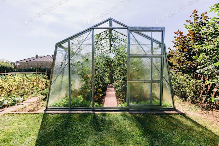 Hinterhof Gewächshaus mit Tomatenanbau