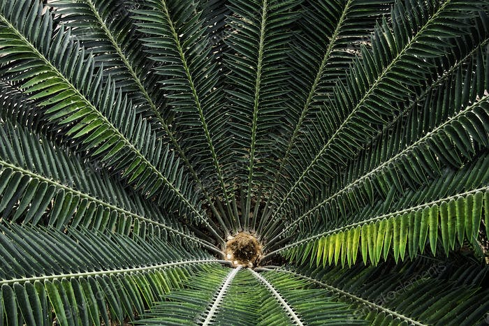 Top view of big palm leafs