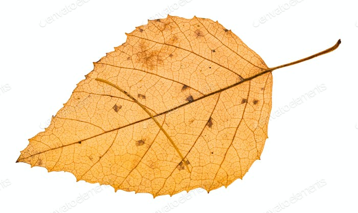 autumn yellow leaf with needle of larch tree