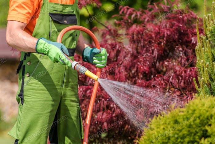 Caucasian Männer Bewässerung Seine Garten Bäume und Pflanzen