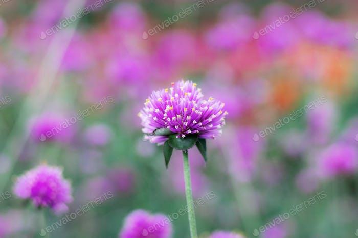 Purple flower in winter
