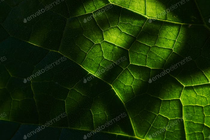 Background of the leaf pattern