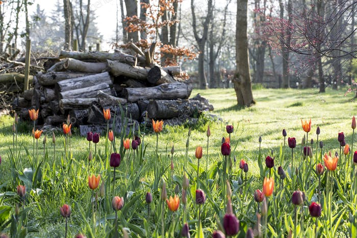 Orchard with a bed of tulips and a stack of logs in the background.