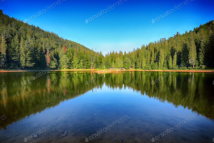 mountain lake among the green fir forest in picturesque summer l