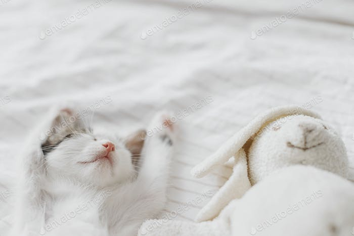 Cute little kitten sleeping on soft bed with bunny toy. Adorable kitty taking cozy nap. Sweet dreams