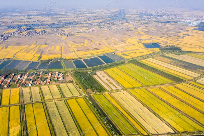 aerial view of paddy field in autumn