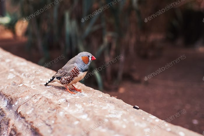 Small bird (zebra finch) from one side on a natural environment