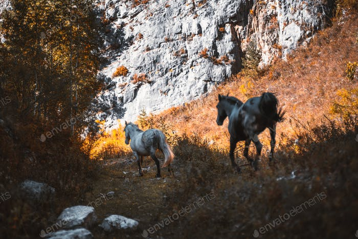 Two horses in mountains, landscape