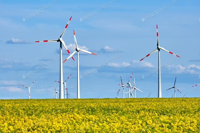 Wind turbines and a flowering canola field