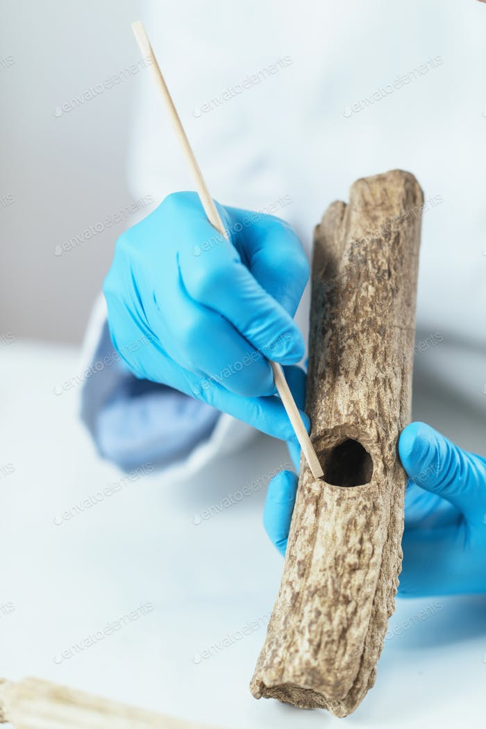 Archaeology Researcher Analyzing Prehistoric Axe